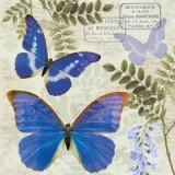 0Servilleta decoupage Blue morpho