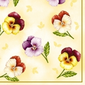 Pansies of cream